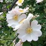 virágterápia